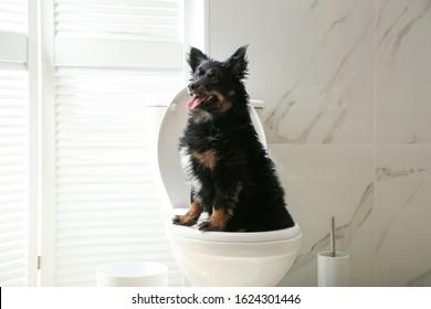 Cute dog sitting on toilet bowl in modern bathroom