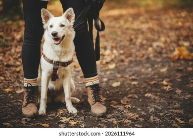 Cute dog sitting at owner legs in autumn woods. Traveling with pet, loyal companion. Adorable white swiss shepherd dog hiking with young woman hipster in fall forest. Travel and Wanderlust