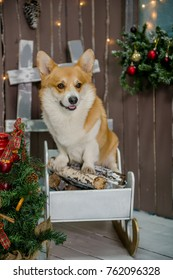 Cute dog sitting in sleighs with wooden logs on the porch next to Christmas decorations