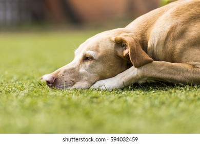 Cute dog sleeping on green grass. Relax and lifestyle. Happy life