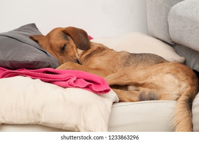 Cute dog sleeping on a pillow