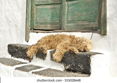 Cute dog sleeping outside, Lanzarote, Canary Islands, Spain