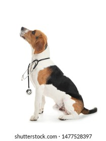 Cute dog with stethoscope on white background. Concept of visiting veterinarian