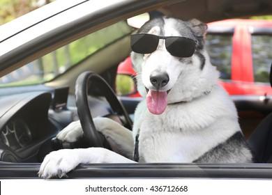 Cute dog in sunglasses sitting in car
