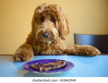 Cute Dog At Table with Steak