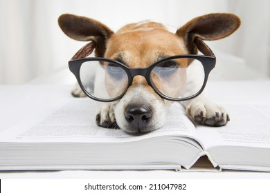 Cute dog tired student reading a book to teach lessons, falls asleep. Back to school