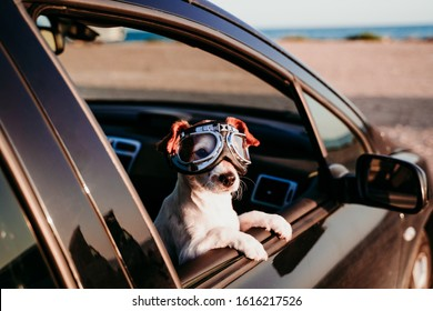 cute dog traveling in a car wearing vintage goggles at sunset