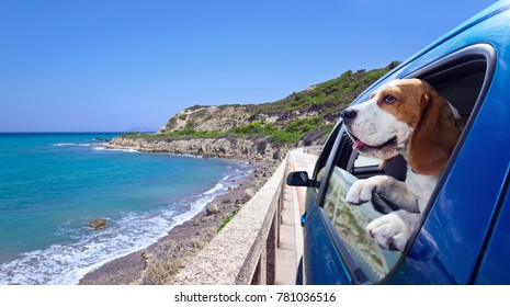 Cute dog travels in the blue car.