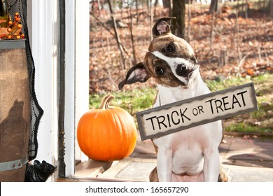 Cute Dog Trick or Treating