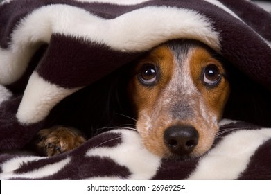 Cute dog is tucked in