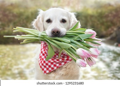 cute dog with tulips in his mouth