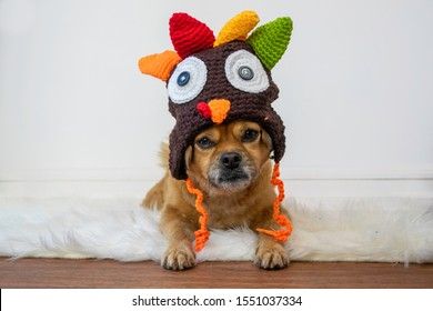 Cute dog in turkey Thanksgiving hat