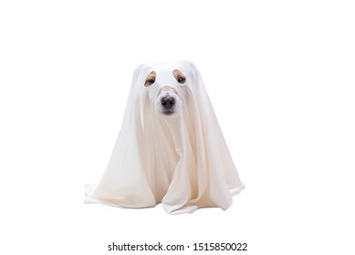 Cute dog under white blanket as costume of Halloween ghost