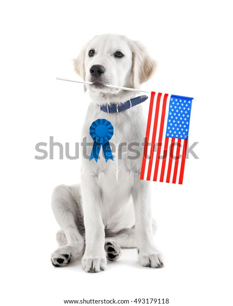 Cute dog with USA flag and award ribbon on white background. USA holiday concept.
