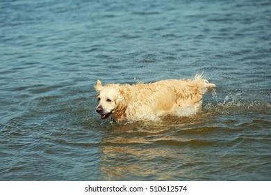 Cute dog in water