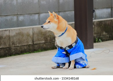 cute dog wearing festival costume. 若 means young.連 means chain