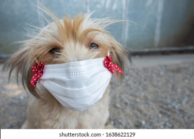 Cute dog wearing masks to protect against germs and air pollution.