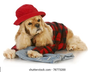 cute dog wearing red hat and plaid shirt - american cocker spaniel