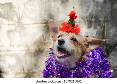 Cute dog wearing a red hat,Chrismas and holiday concept.