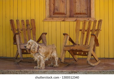 a cute dog and wooden rocking chairs on veranda in Cuba