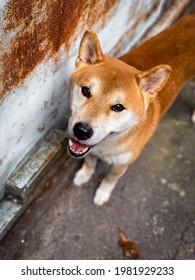 Cute doggo Begging for Food