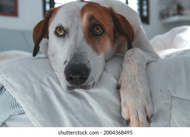 Cute doggo resting in the bed