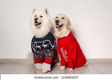 Cute dogs in Christmas sweaters on floor near white wall