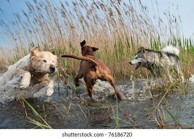 Cute dogs having fun in the water
