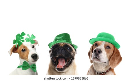 Cute dogs with leprechaun hats on white background. St. Patrick's Day - Shutterstock ID 1899863863