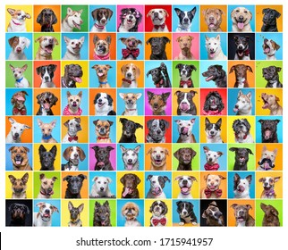 cute dogs in a studio shot collage on an isolated background