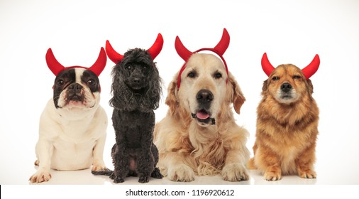 cute dogs wearing devil horns for halloween, collage image