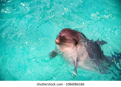 Cute dolphin in pool in dolphinarium
