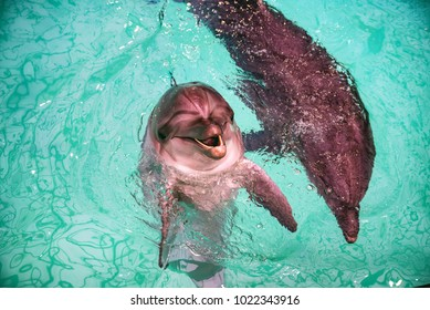 Cute dolphins in pool in dolphinarium