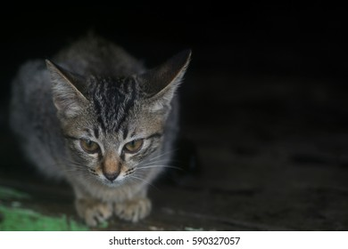 Cute domestic cat sitting on the wooden floor with soft dark background for copyspace. (Selective focusing)