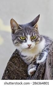 Cute domestic cat in wildlife