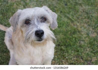 Cute domestic dog sit in the yard