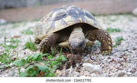 Cute domestic pet turtle in the open air