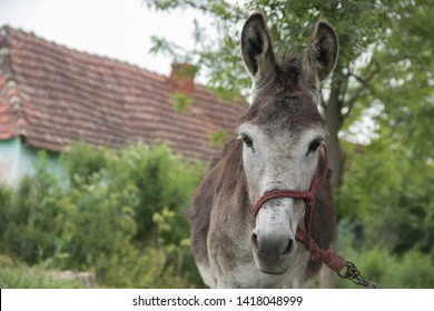 Cute donkey at country side outside stable, enjoying nice weather, life is good, near Zrenjanin city (Serbia), 02 June 2019