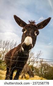 A cute donkey on a farm in Tuscany