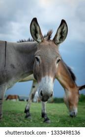 Cute Donkey Photobomb