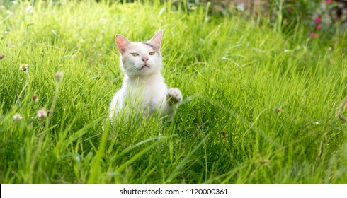 A cute dosmic cat playing in the glass field