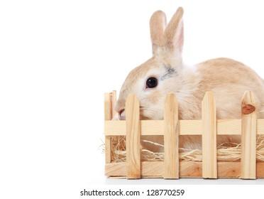 rabbit hutch images stock photos vectors shutterstock