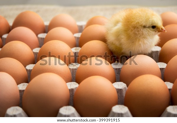 Cute Easter chicken with eggs in carton