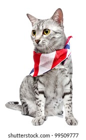 A cute Egyptian Mau breed cat with a US flag patterned bandana tied around her neck.   White Background.