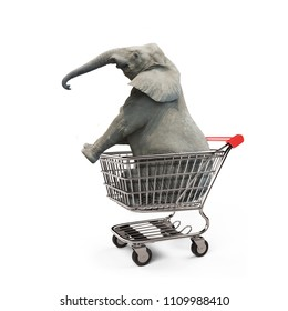 Cute elephant sitting in the shopping cart, isolated on white background.