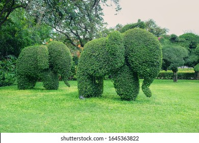 Cute Elephants family shaped topiary on green lawn in public park in Thailand. Trimming ornamental shrub is very popular landscaping and gardening in Asia.Topiary clipping.