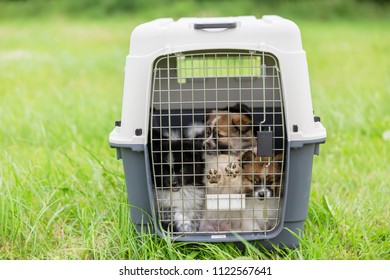 cute Elo puppies sitting in a pet carrier