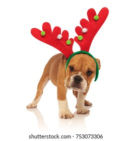 Bulldog Rudolph Reindeer Cute Christmas Men/'s Sweater \ Jumper