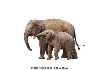 Cute family of  elephants isolated on white
