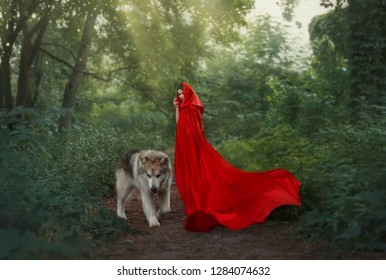 cute fantastic image of fairy-tale character, mysterious dark-haired girl with long flying waving scarlet red bright raincoat stands in the forest with a huge wild wolf who leaves the lady alone